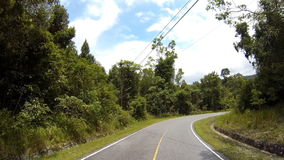 Camino en bosque almacen de video