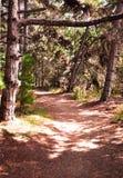 Camino en bosque imágenes de archivo libres de regalías