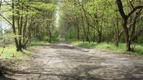 Camino en bosque Fotos de archivo libres de regalías