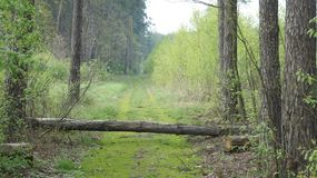 Camino en bosque Fotos de archivo