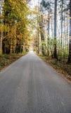 Camino en bosque colorido del otoño Fotografía de archivo libre de regalías