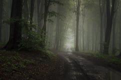Camino en bosque con niebla misteriosa Imagenes de archivo