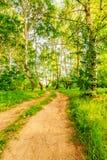 Camino en bosque del abedul Imagenes de archivo