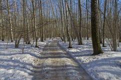 Camino en bosque del abedul de la primavera Foto de archivo