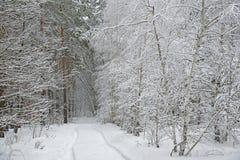 Camino en bosque del invierno Imagen de archivo