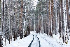 Camino en bosque del invierno Foto de archivo libre de regalías