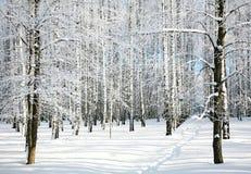 Camino en bosque del invierno Fotos de archivo libres de regalías