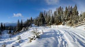 Camino en bosque del invierno Imágenes de archivo libres de regalías