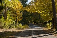 Camino en bosque del otoño Foto de archivo