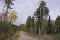 Camino en bosque del otoño Fotos de archivo libres de regalías