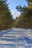 Camino en bosque del pino del invierno Imágenes de archivo libres de regalías