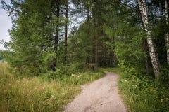 Camino en bosque del verano Fotos de archivo