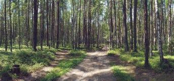 Camino en bosque del verano en un día soleado Imágenes de archivo libres de regalías