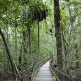 Camino en bosque denso. Imagen de archivo