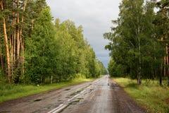 Camino en bosque después de la lluvia Foto de archivo