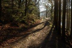 Camino en bosque en invierno fotos de archivo libres de regalías