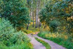 Camino en bosque en la luz del sol de la salida del sol Foto de archivo