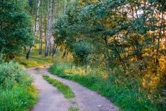 Camino en bosque en la luz del sol de la salida del sol Imagen de archivo libre de regalías