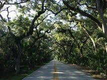 Camino en bosque en Tomoka State Park en la Florida Imagen de archivo