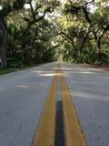 Camino en bosque en Tomoka State Park en la Florida Fotos de archivo