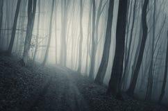 Camino en bosque frecuentado con niebla azul en Halloween Imagen de archivo