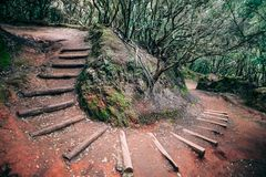 Camino en bosque jurásico del laurel fotografía de archivo