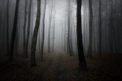 Camino en bosque oscuro con niebla Imagenes de archivo
