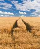 Camino en campo Imagen de archivo