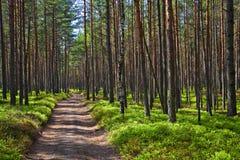 Camino en el bosque. Fotos de archivo
