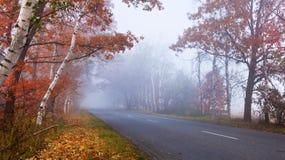 Camino en el bosque. Imágenes de archivo libres de regalías