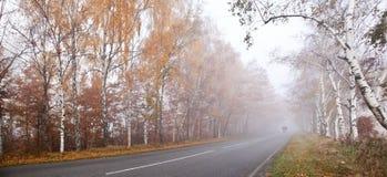 Camino en el bosque. Imagen de archivo libre de regalías