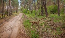 Camino en el bosque Imagen de archivo libre de regalías