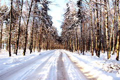 Camino en el bosque Imágenes de archivo libres de regalías