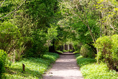 Camino en el bosque fotos de archivo libres de regalías