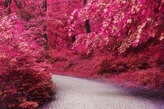 Camino en el bosque fotografía de archivo