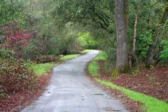 Camino en el bosque fotografía de archivo libre de regalías