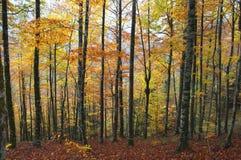 Camino en el bosque con las hojas de otoño Imagen de archivo