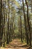 Camino en el bosque en día de verano soleado imágenes de archivo libres de regalías