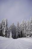 Camino en el bosque de la madera de pino Fotografía de archivo
