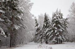 Camino en el bosque del invierno Imagen de archivo