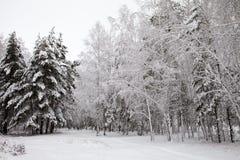 Camino en el bosque del invierno Fotos de archivo