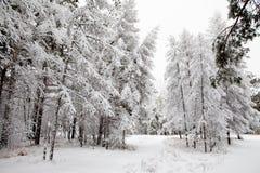 Camino en el bosque del invierno Imagenes de archivo