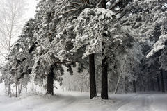 Camino en el bosque del invierno Foto de archivo libre de regalías