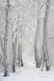 Camino en el bosque del invierno Fotos de archivo libres de regalías