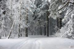 Camino en el bosque del invierno Fotografía de archivo libre de regalías