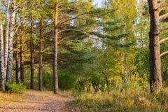 Camino en el bosque del otoño Imágenes de archivo libres de regalías