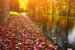 Camino en el bosque del otoño, brillante, soleado Fotografía de archivo libre de regalías