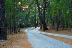 Camino en el bosque del pino Fotografía de archivo libre de regalías
