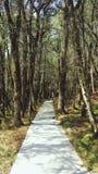 Camino en el bosque, manera de la naturaleza Imagen de archivo libre de regalías