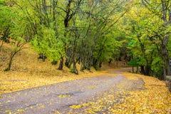 Camino en el bosque otoñal Fotografía de archivo